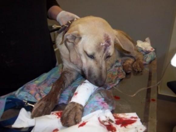 Τι κάνουμε αν γίνουμε μάρτυρες κακοποίησης ή θανάτωσης ζώου;Αναλυτικός οδηγός