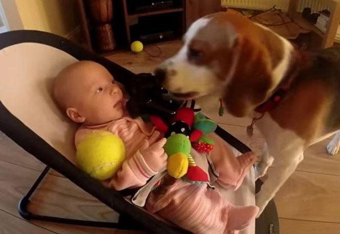 Η απίθανη συγνώμη ενός σκυλου που έκλεψε το παιχνίδι ενός μωρού (Video)
