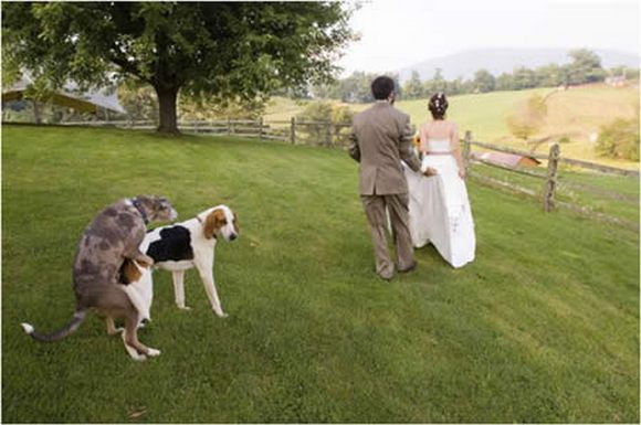 funny weddings 03 in Wedding Photos That Will Never Be in Your Wedding Album