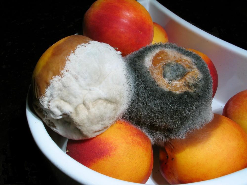 Το super κόλπο για να μην μουχλιάζουν τα φρούτα στο ψυγείο!