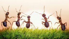 Πώς να διωξετε τα μυρμήγκια
