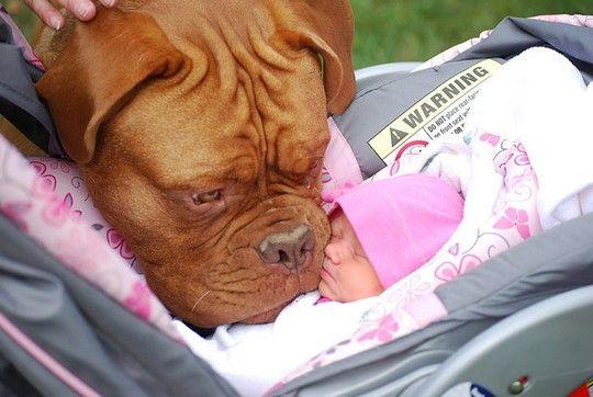 Θα λιώσετε! Μωράκια αγκαλιά με μεγάλους σκύλους