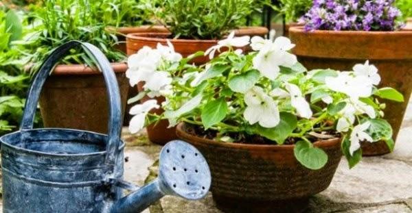 ΚΑΤΑΠΛΗΚΤΙΚΟ ΚΟΛΠΟ! Δοκιμάστε το και δείτε τα φυτά σας να μεγαλώνουν στο άψε- σβήσε!