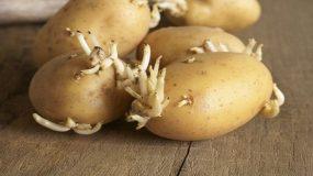 Αυτές οι τροφές μπορεί να είναι θανατηφόρες, και οι περισσότεροι από εμάς τις έχουμε  στις Κουζίνες μας