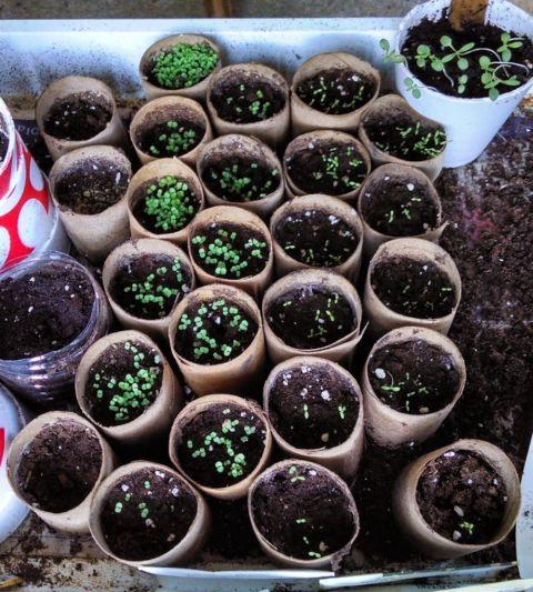 Grow-Seedlings
