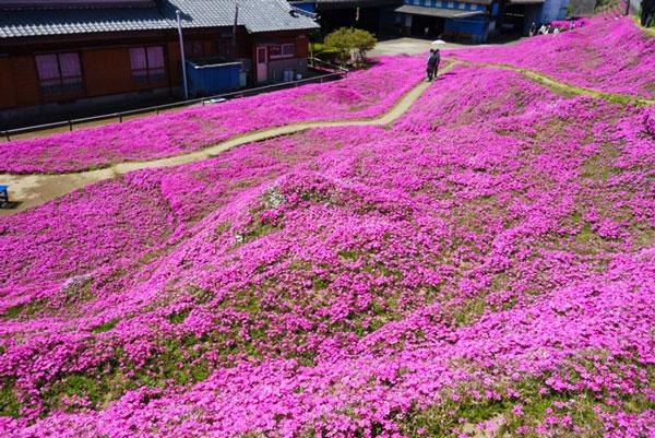 Σύζυγος φύτεψε για την τυφλή γυναίκα του χιλιάδες λουλούδια για να τα μυρίζει!
