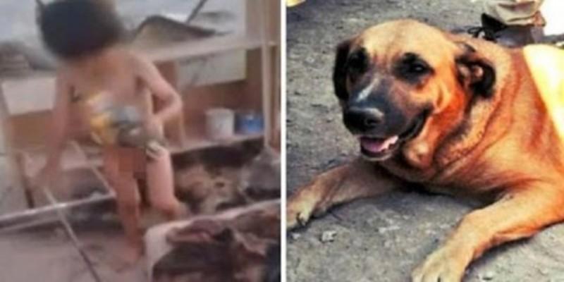 Σκυλί θήλαζε δίπλα σε σκουπίδια, γυμνό 2χρονο παιδάκι που είχε εγκαταλείψει η μητέρα του (Video & Photos)