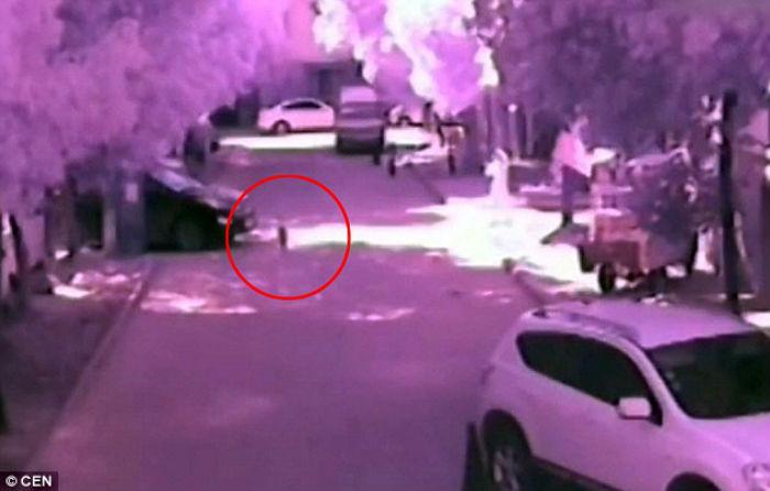 Βίντεο-σοκ: Η μητέρα παίζει με το κινητό της ενώ το παιδί της παρασύρεται από αυτοκίνητο