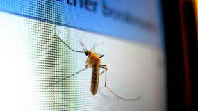 6 φυτά που θα σας προστατέψουν από τα κουνούπια