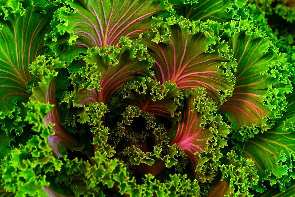 plant-690051_960_720