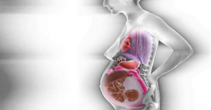 Δείτε την αναδιαταξη των εσωτερικών οργάνων μιας γυναίκας, κατά τη διάρκεια της εγκυμοσύνης!