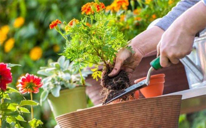 Φτιάξτε μόνοι σας λίπασμα για τον κήπο σας!