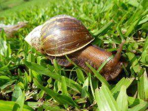 snail-1247733_960_720