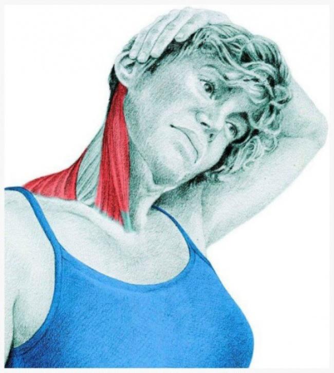 Δείτε 21 εικόνες που απεικονίζουν τους μυς που δουλεύετε όταν τεντώνεστε