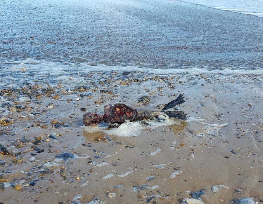 Έριξε το διαδίκτυο η φωτογραφία νεκρής γοργόνας που τράβηξε Βρετανός