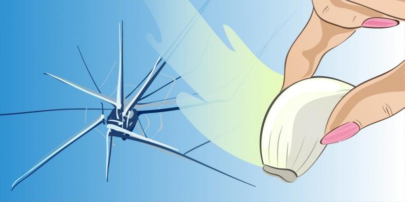 Βάλτε μια σκελίδα σκόρδο στο παράθυρο σας! Και θα εκπλαγείτε από το αποτέλεσμα