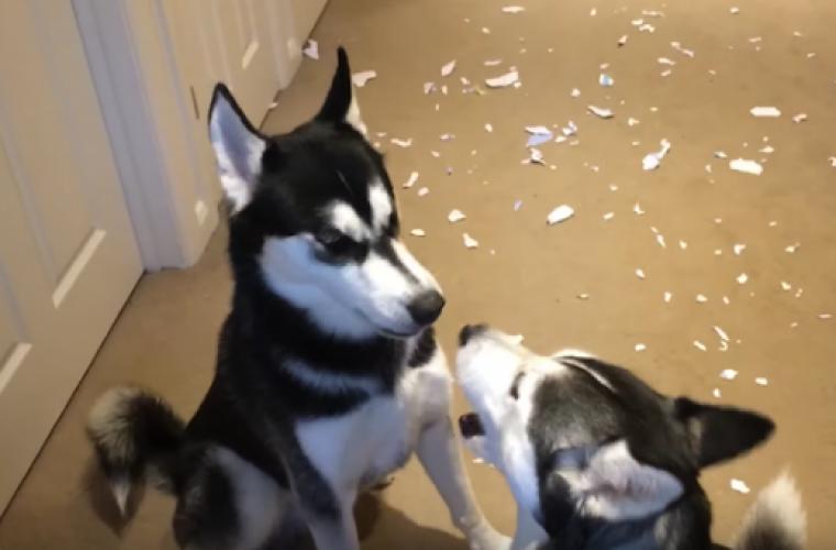Σκύλοι αλληλοκατηγορούνται όταν τους ρωτάει το αφεντικό ποιος έκανε ζημιά! Η συζήτηση τους που έγινε viral