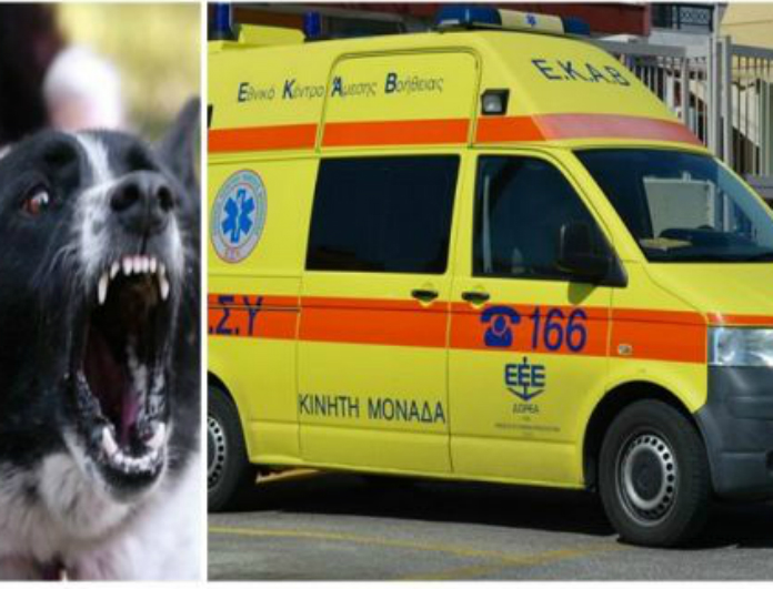 Σοκ Σκύλος κατακρεούργησε 30χρονο ! Πάγωσαν οι γιατροί με τα τραύματα του