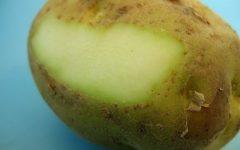 Προσοχή στις πατάτες που έχουν αυτή την όψη – Τι κίνδυνος υπάρχει (vid)