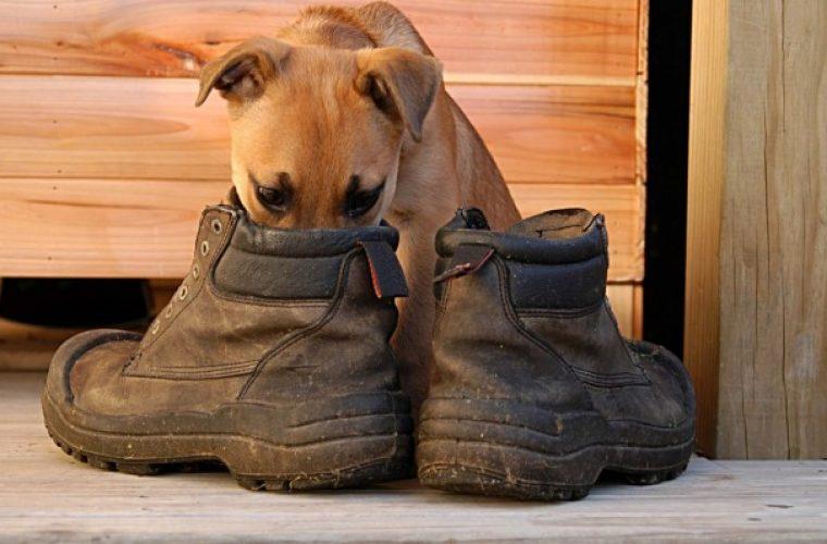 Παπούτσια που μυρίζουν άσχημα: Πέντε εύκολες και γρήγορες λύσεις