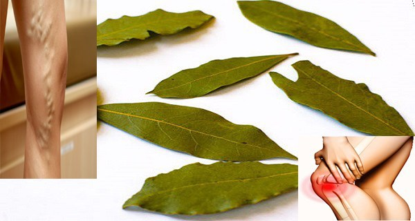 Τα φύλλα από αυτό το φυτό είναι πιο ευεργετικά από όσο φαντάζεστε!