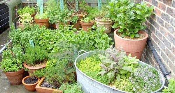 Δείτε πως να καλλιεργήσετε τα δικά σας βότανα και μπαχαρικά στο σπίτι