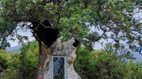 Εντυπωσιάζει το εκκλησάκι που χτίστηκε μέσα σε δέντρο 300 ετών!