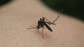 Δυο κρούσματα ελονοσίας – Υπό επιτήρηση περιοχές της χώρας
