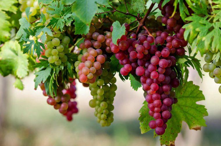 Σταφύλι: Το φρούτο που θα σε βοηθήσει να ξεφουσκώσεις- Θρεπτική αξία και θερμίδες