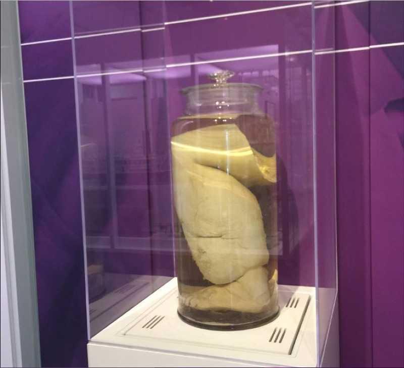Τα εκθέματα αυτού του μουσείου θα σας κάνουν να τα χάσετε