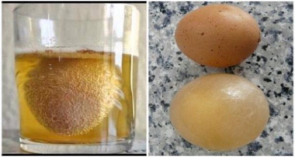 Παίρνει ένα αυγό και το βάζει μέσα σε ένα ποτήρι με μηλόξυδο.. 'Οταν μάθετε το λόγο.. Θα εκπλαγείτε!