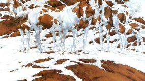 Πόσα άλογα βλέπετε σε αυτή την εικόνα;; Δεν θα πιστεύετε την απάντηση...