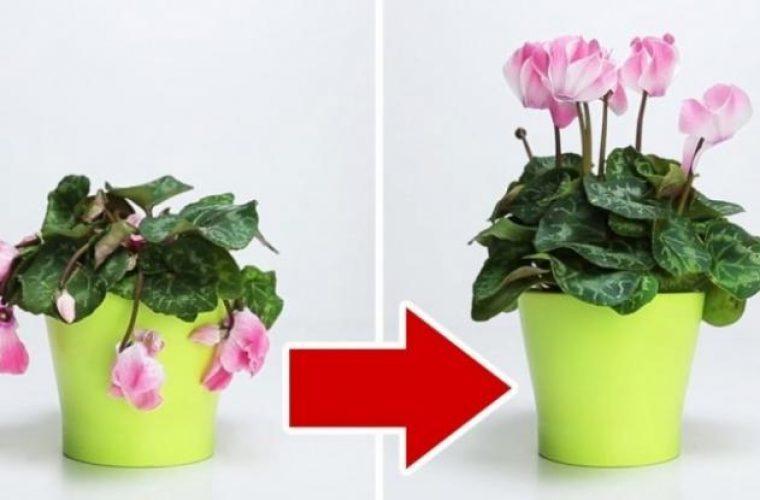 Έτσι θα «αναστήσετε» τα μισοπεθαμένα φυτά σας