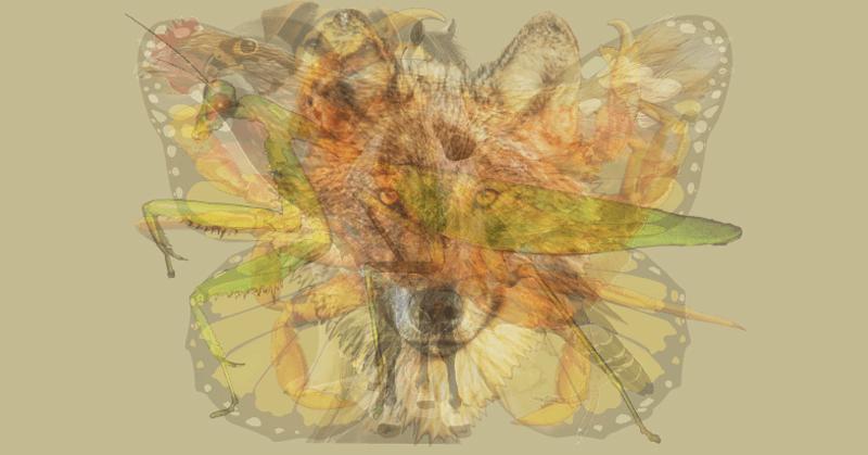 Ποιο ζώο βλέπετε πρώτο; Αυτό που βλέπετε πρώτο, αποκαλύπτει την αληθινή σας προσωπικότητα