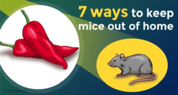 7 τρόποι που θα σας βοηθήσουν να κρατήσετε τα ποντίκια μακρυά από το σπίτι σας