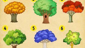 Τεστ: Διαλέξτε ένα δέντρο και ανακαλύψτε τι σας περιμένει το 2020!