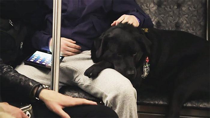 Σκύλος πηγαίνει κάθε μέρα μόνος του βόλτα στο κοντινότερο πάρκο, παίρνοντας το λεωφορείο