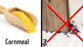 Απομακρύνετε με φυσικό τρόπο τα κουνούπια, τις κατσαρίδες και τα μυρμήγκια από το σπίτι χωρίς την χρήση χημικών!