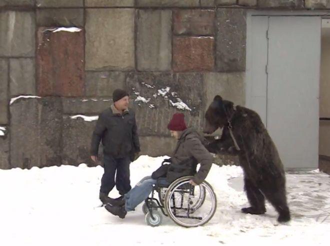 Απίστευτο και όμως αληθινό βίντεο: Αρκούδα σπρώχνει τον τραυματισμένο εκπαιδευτή της, που βρίσκεται σε αναπηρικό καροτσάκι.