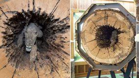 Ένας σκύλος κόλλησε μέσα στον κορμό του δέντρου για 20 χρόνια και μουμοποιήθηκε
