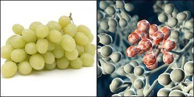 Κι όμως αυτή είναι η Πυθαγόρεια διατροφή που εξαφανίζει το 95% των ασθενειών (φωτό)