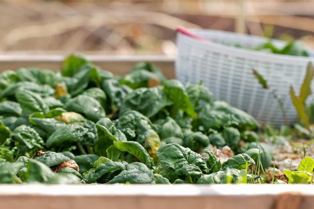 Καταπολεμήστε την κόπωση και την ημικρανία με αυτές τις 30 τροφές που είναι πλούσιες σε σίδηρο!