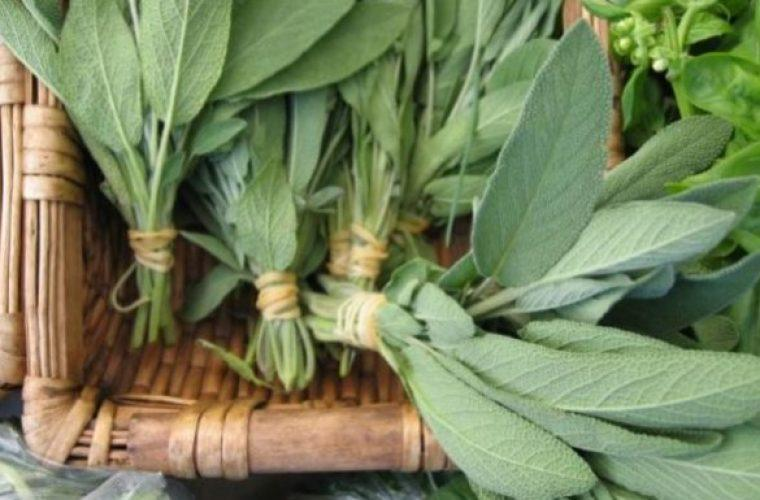 Φασκόμηλο το βότανο της αθανασίας! Όλα όσα πρέπει να γνωρίζετε για αυτό το βότανο
