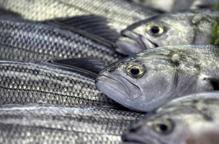 Προσοχή!! Αυτά είναι τα ψάρια που καλό είναι να αποφεύγουμε