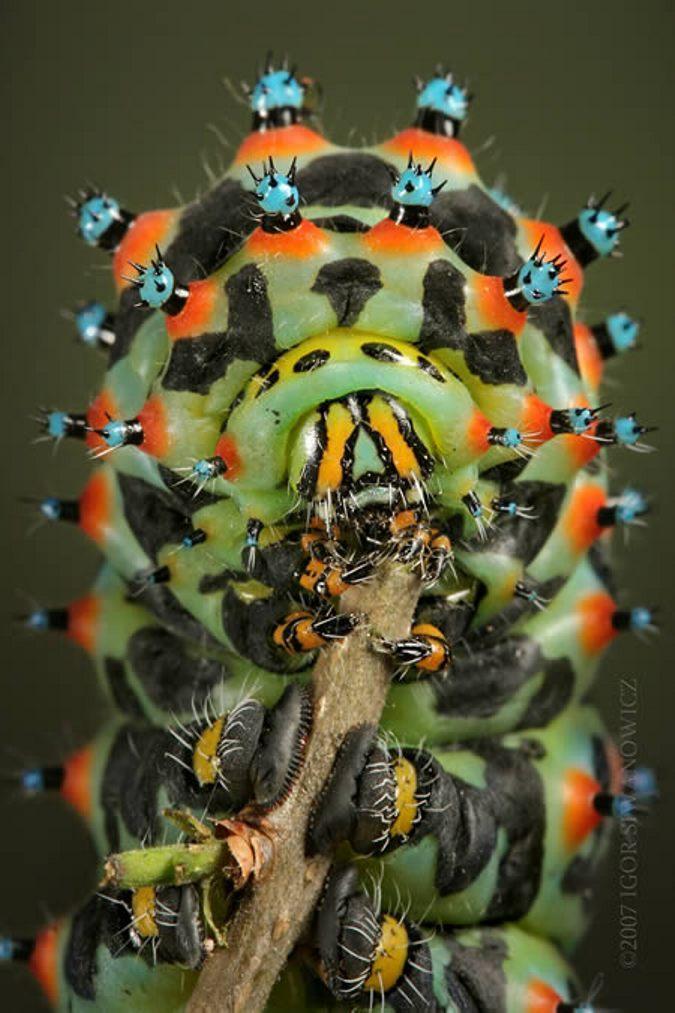 Αυτά είναι τα 10 πιο περίεργα και τρομακτικά έντομα που υπάρχουν στον κόσμο