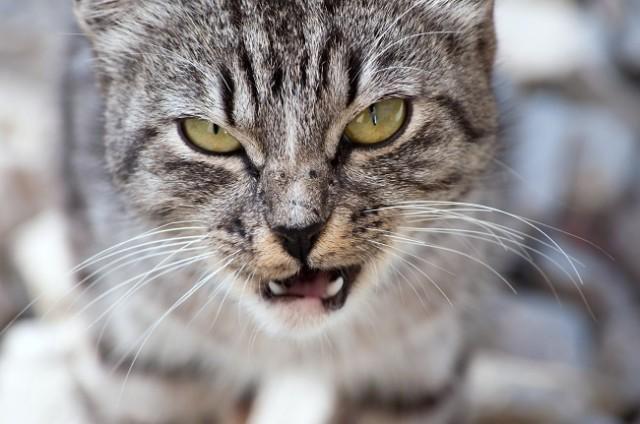Έρευνα το επιβεβαίωσε!Οι γάτες κατά βάθος θέλουν να σκοτώσουν τους ανθρώπους