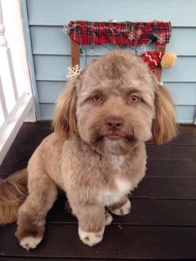 Μεγάλη αίσθηση έχει προκαλέσει στο διαδίκτυο αυτός ο σκύλος που μοιάζει με άνθρωπο (εικόνες)
