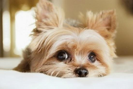 Εμπιστευθείτε το ένστικτό των σκυλιών! Μπορούν να σας «πουν» αν κάποιος είναι κακός άνθρωπος