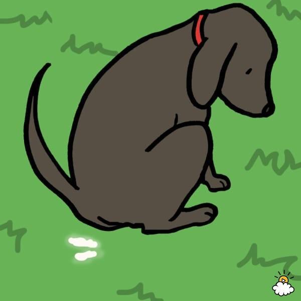 9 τύποι και χρώματα κοπράνων των σκύλων που δεν πρέπει να αγνοήσει κανένας ιδιοκτήτης σκύλων!