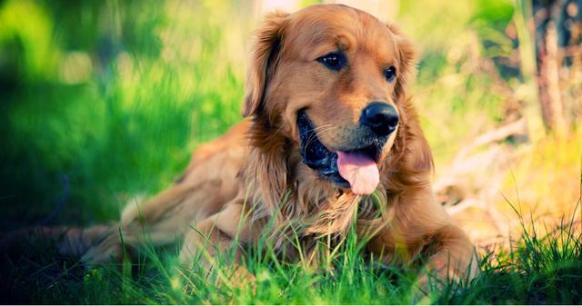Η απάντηση σε αυτούς που δεν θέλουν και αντιπαθούν τα σκυλιά